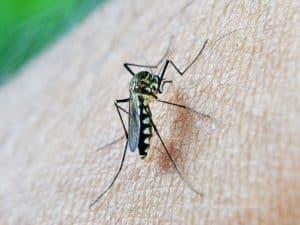 mosquito-213806_1280